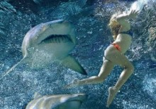 sharkeatinggirl2